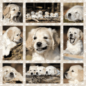 Dog kids 1000 pcs
